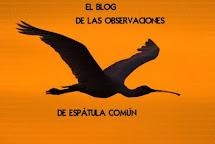 BLOG DE OBSERVACIONES DE ESPÁTULA COMÚN