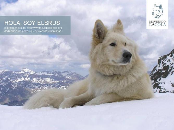 MOUNTAINDOGS: envíanos su foto a info@lafabricadetextos.es