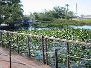 Everglades Florida 2006