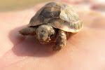 ¿Qué es lo que hace a esta tortuga tan hermosa?