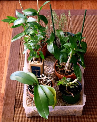 Houseplant Care Guides Orchid Care 101