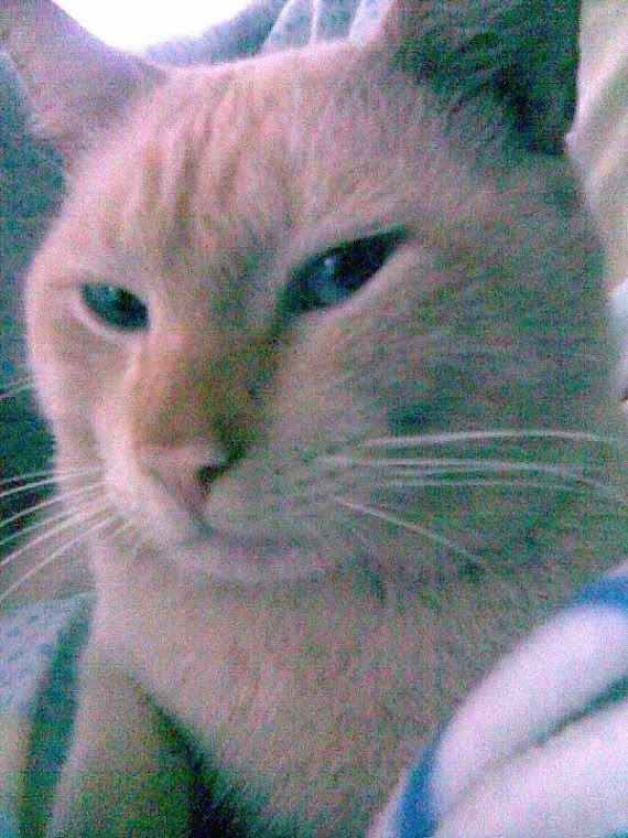 Quero que conheção o meu gato:Garfild