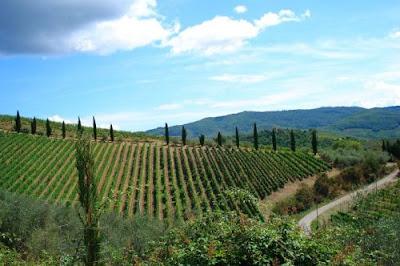 Vivaio Forestale Abruzzo : Apocalisse italia: in faccia allabruzzo