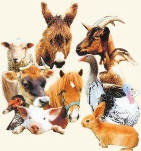 Alphabet animalier