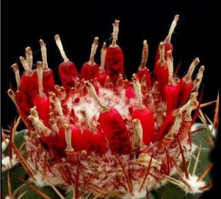 Cactus, beauté sauvage