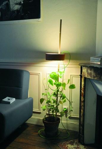 Angoisse cosmique design autour de la plante d 39 int rieur - Plante d interieur design ...