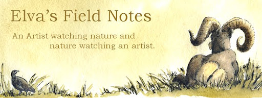 Elva's Field Notes