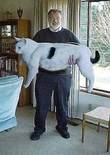 Biggest Cat