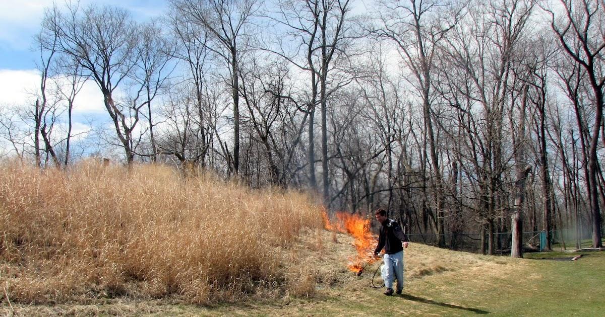 skokie country club golf course management  native grass    naturalized grass burn