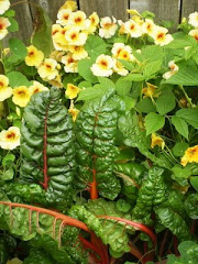 Chard &amp; Nasturtiums