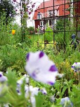 en skymt av trädgården