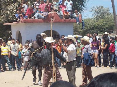 Mezquite Alto Sinaloa