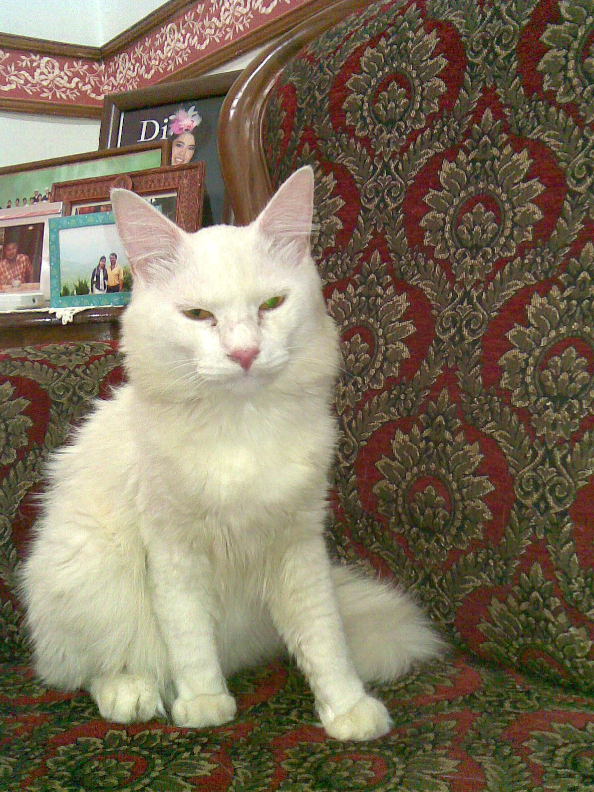 MaMa Nor LaRa Koleksi Kucing Kucing Mama