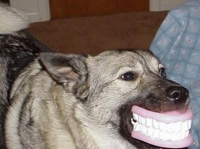 Chien belles dents