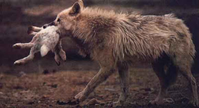 Nature cruelle