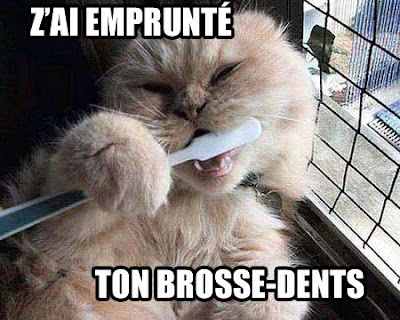 Lolcat français