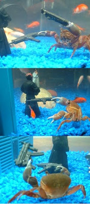 Crabe armé