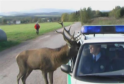 Elan police