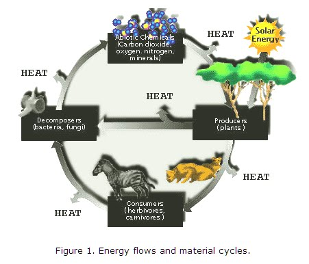rainforest and photsynthesis cycle Crassulacean acid metabolism, also known as cam photosynthesis and the carbon is released to the calvin cycle so that photosynthesis may take place.