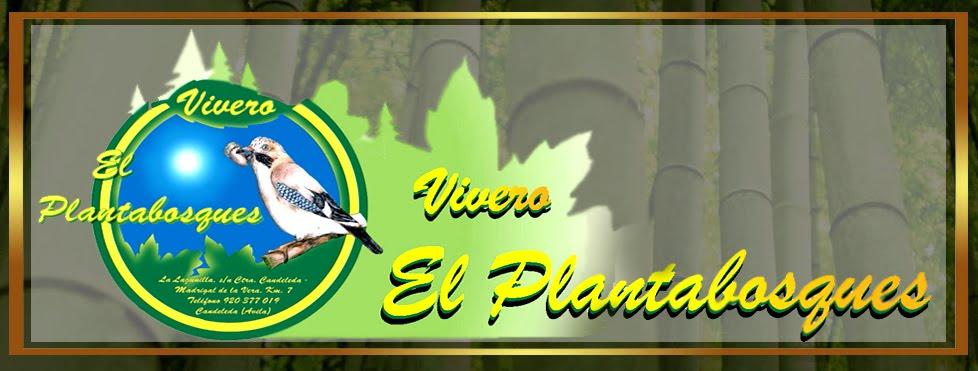 Gu a del plantabosques listado de plantas - Cuidados del magnolio ...