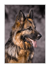 "This Blog Is Dedicated To My Amazing Long Coat German Shepherd ""Cora"""