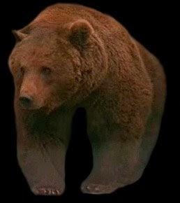 Lobo astur el oso pardo - Muebles los leones valencia ...