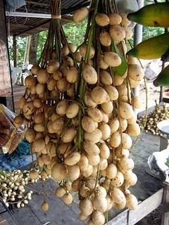 r 25 Buah Langka Dari Kalimantan
