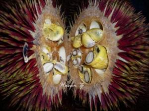 2 25 Buah Langka Dari Kalimantan