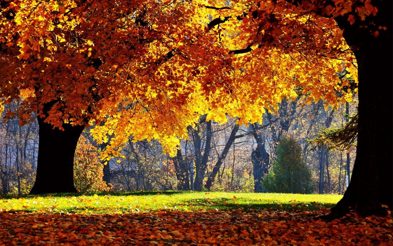 http://4.bp.blogspot.com/_hbCSFFt9eB8/TMrpRaYk_6I/AAAAAAAAAnU/OPHjPSO8vsQ/s1600/autumn_falls-1280x800.jpg