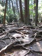En la cima del Monte Kurama
