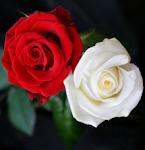 Mawar Berapi