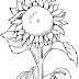 Desenho de flor para colorir e muitos desenhos de natal para colorir. Desenhos infantil para colorir