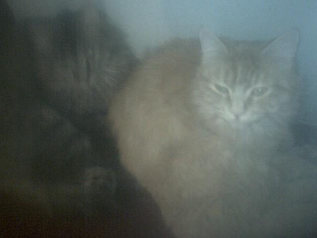 Sleepy kitties (left to right = Precious Angel and Tiger taken in 2008