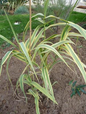 Ma terre de bruy re octobre 2010 for Cactus exterieur resistant au froid