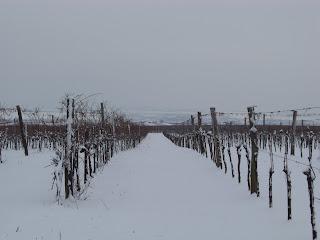 Schnee im Weingarten von Winzer Andreas Mayer in Pillersdorf