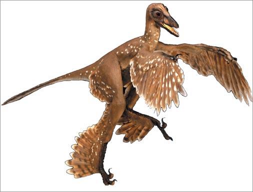 dinosaur feathers