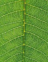pollice verde...