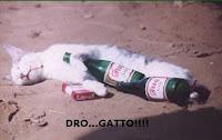 gatto tossico