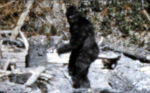 http://4.bp.blogspot.com/_hnM7fuJHRYI/TOwcAErptRI/AAAAAAAABIg/OgpoC3XvfPQ/s1600/60536-bigfoot_s_discovered_fact_fiction.jpg