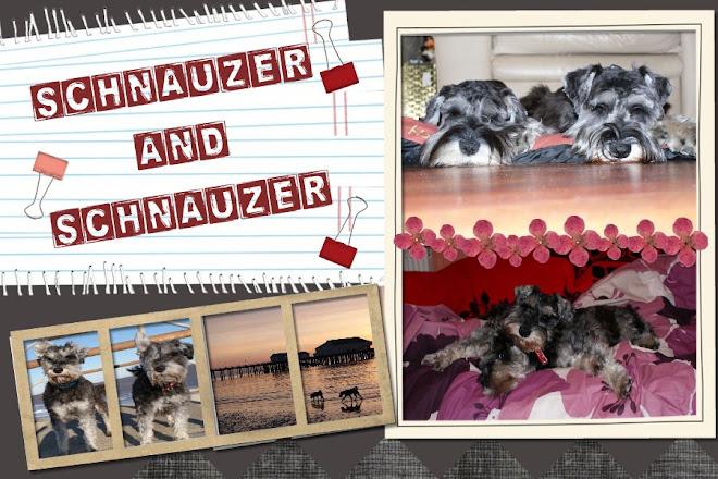 Schnauzer and Schnauzer!