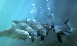 Save dolphins and whales from slaughter
