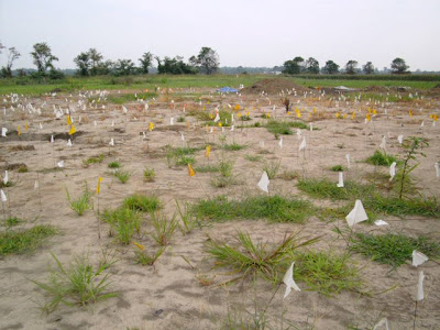 The flags mark surface features at the dig site