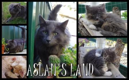 Aslan's Land