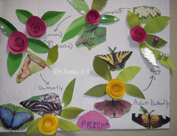 Cards Crafts Kids Projects Butterfly Life Cycle