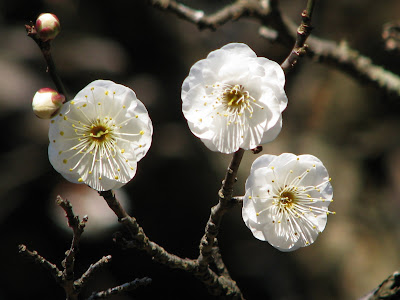 narita sakura