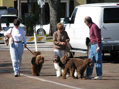 fufu dogs