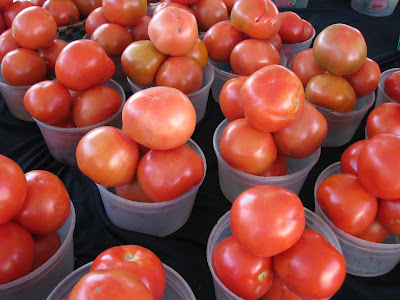 fresh florida tomatoes