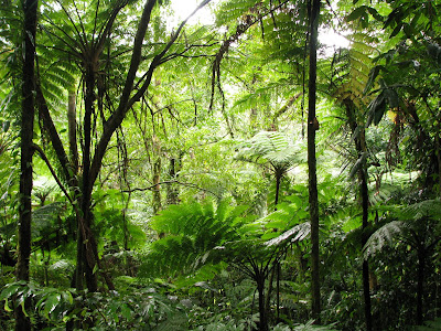 The hike goes through the rainforests of Pohnpei. - Courtesy of 4.bp.blogspot.com