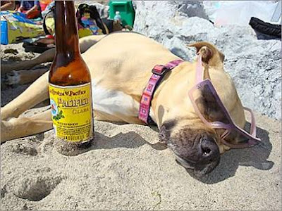 dog tanning on beach