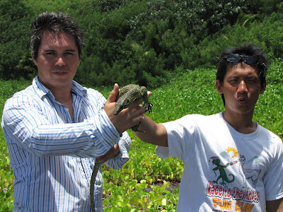 mangrove monitor lizard